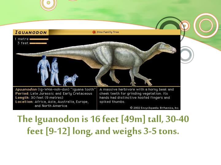 The Iguanodon is 16 feet [49m] tall, 30-40 feet [9-12] long, and weighs 3-5 tons.