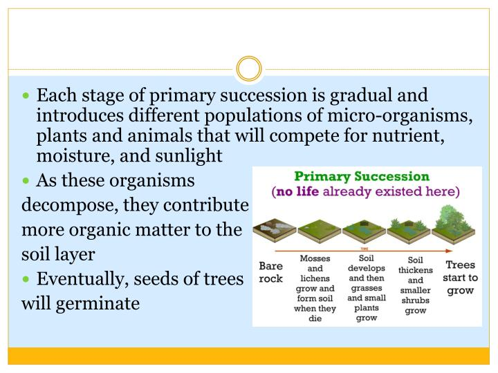 Each stage of primary succession is gradual and introduces different populations of micro-organisms, plants and animals that will compete for nutrient, moisture, and sunlight