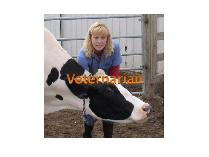 Veternarian
