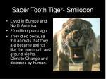 saber tooth tiger smilodon