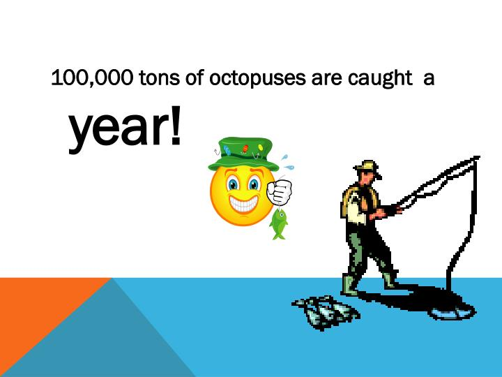 100,000 tons of octopuses are