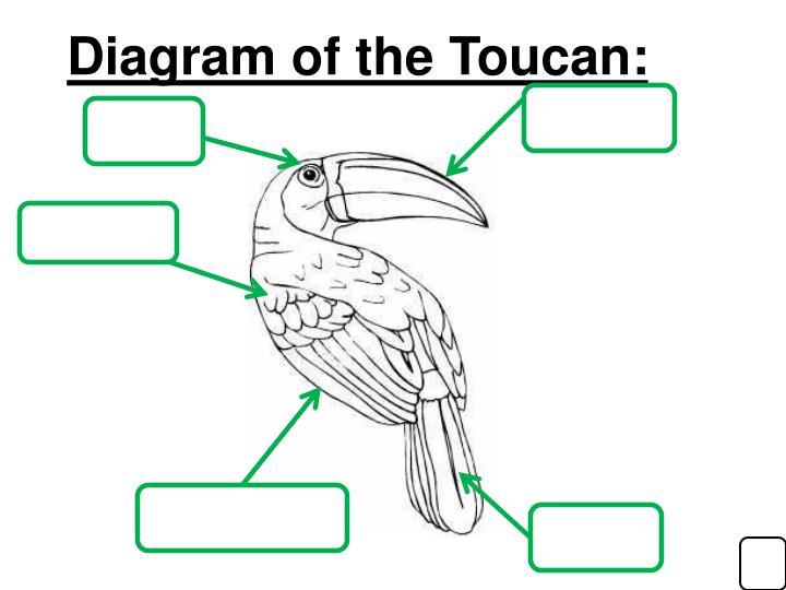 Diagram of the Toucan: