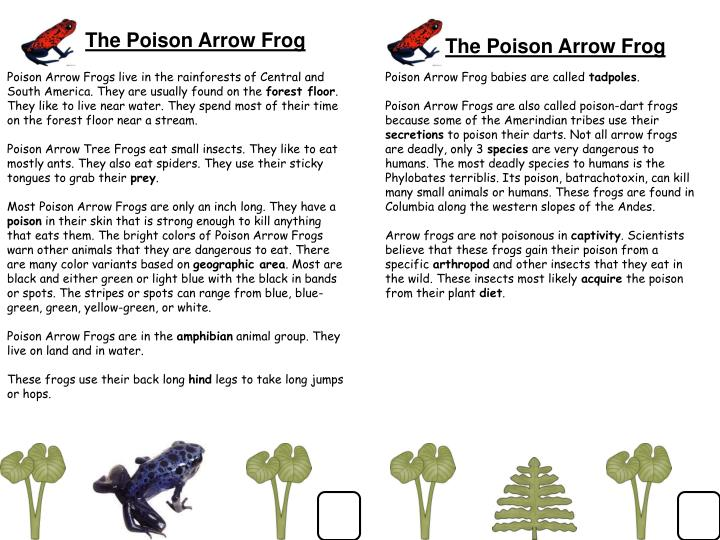 The Poison Arrow Frog