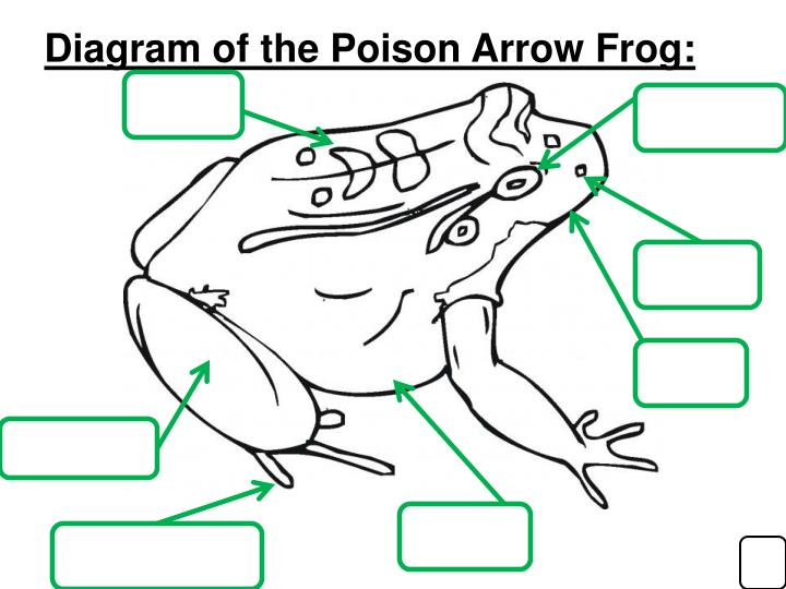 Diagram of the Poison Arrow Frog: