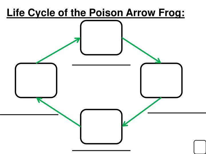 Life Cycle of the Poison Arrow Frog: