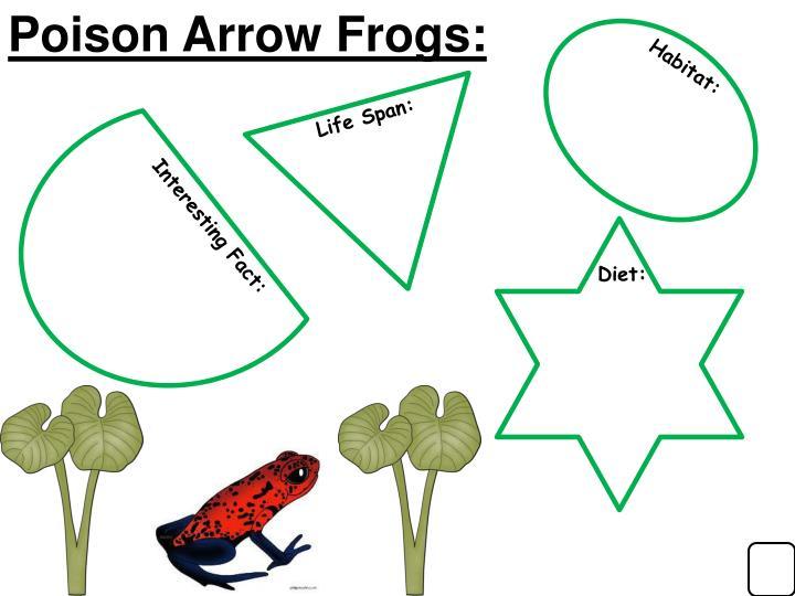 Poison Arrow Frogs: