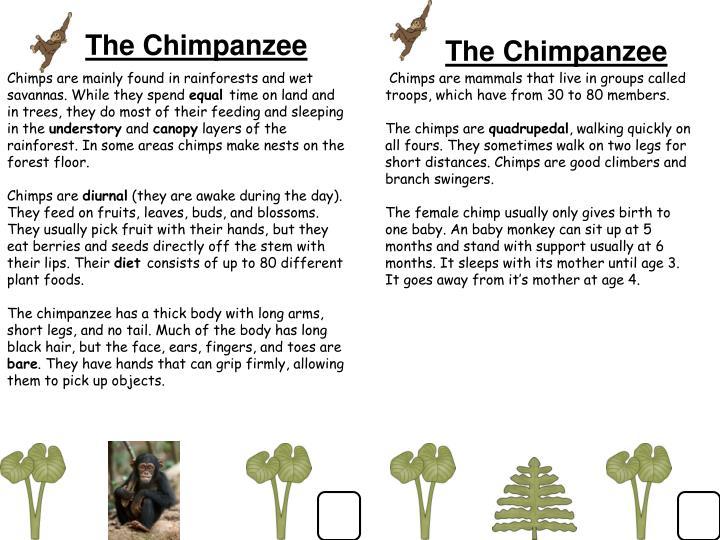 The Chimpanzee