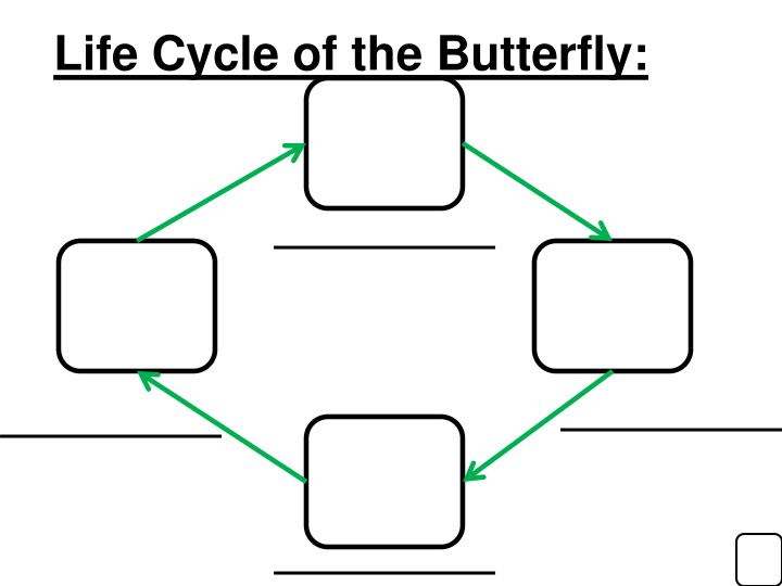 Life Cycle of the Butterfly: