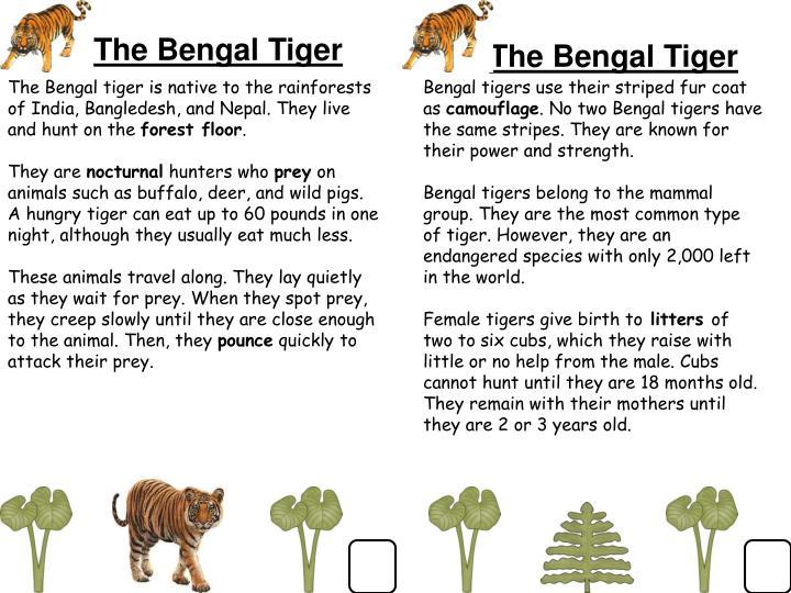 The Bengal Tiger