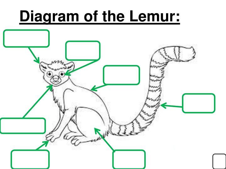Diagram of the Lemur: