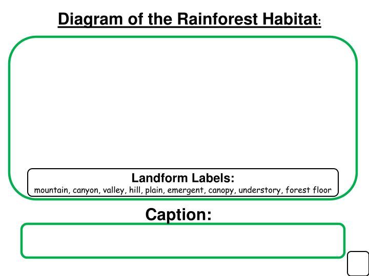 Diagram of the Rainforest Habitat