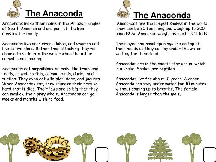 The Anaconda