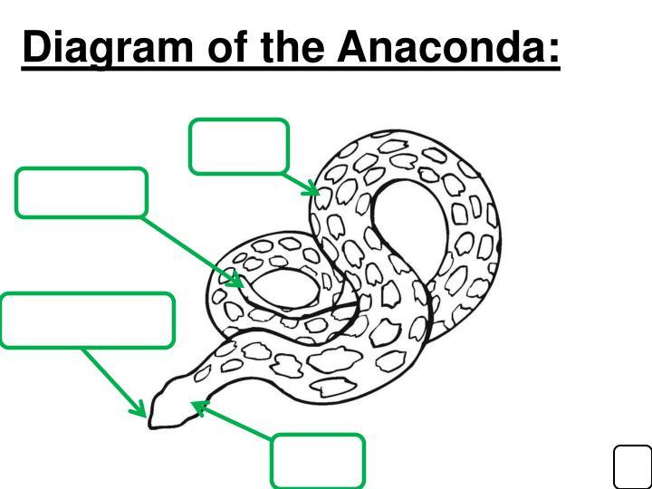 Diagram of the Anaconda: