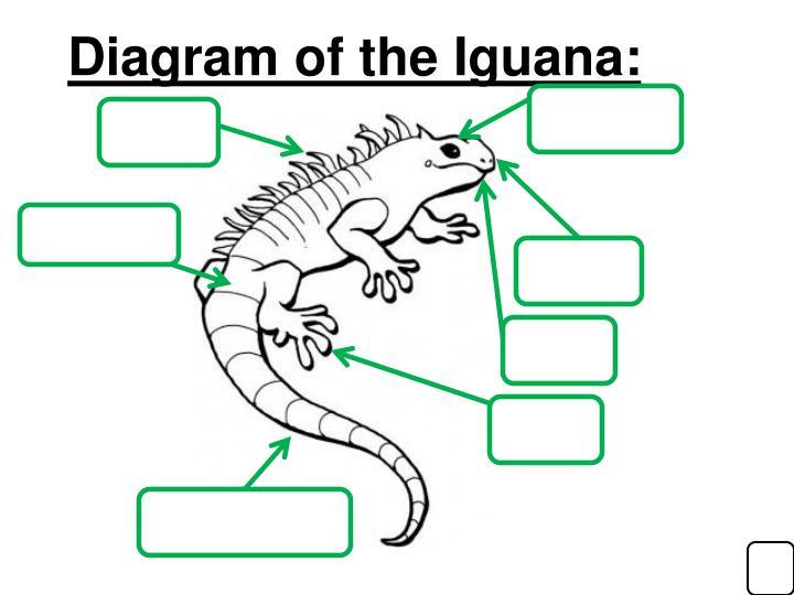 Diagram of the Iguana: