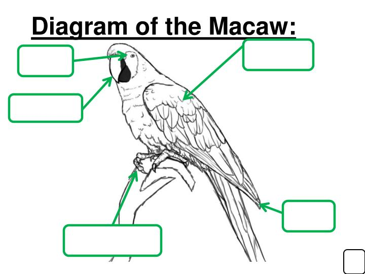 Diagram of the Macaw: