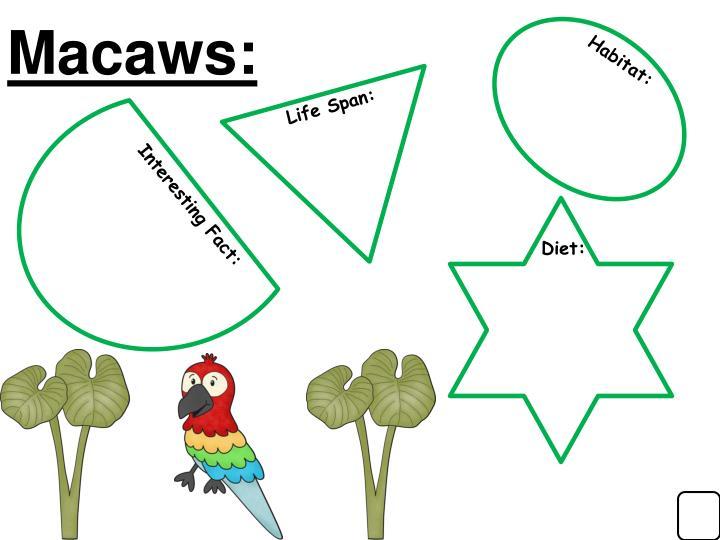 Macaws: