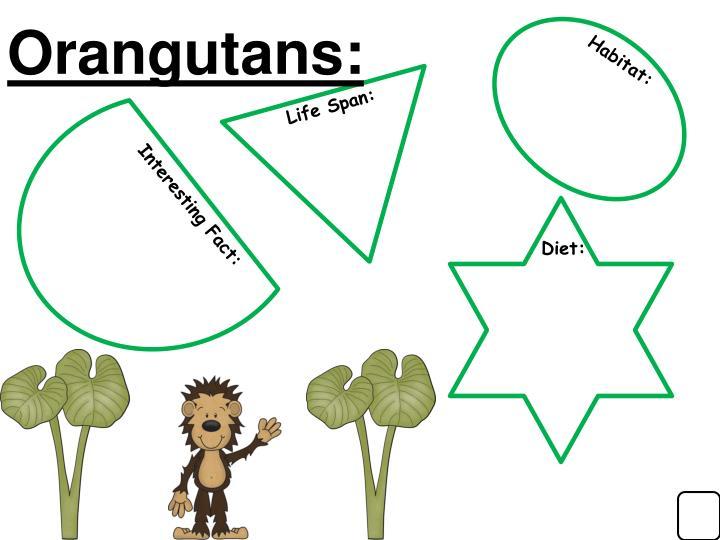 Orangutans: