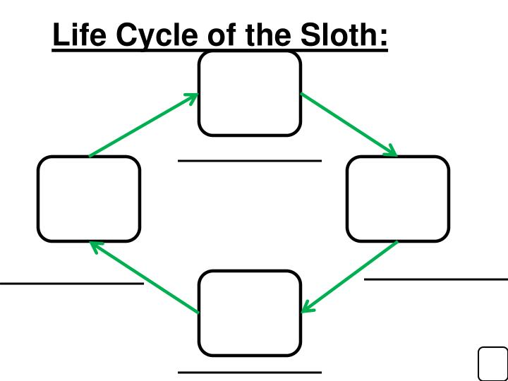 Life Cycle of the Sloth: