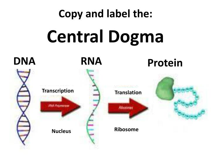 Copy and label the: