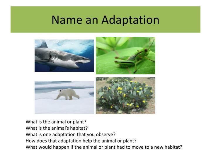 Name an Adaptation