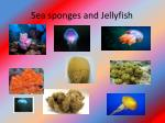 sea sponges and jellyfish