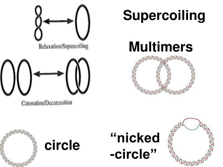 Supercoiling
