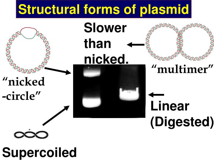 Structural forms of plasmid