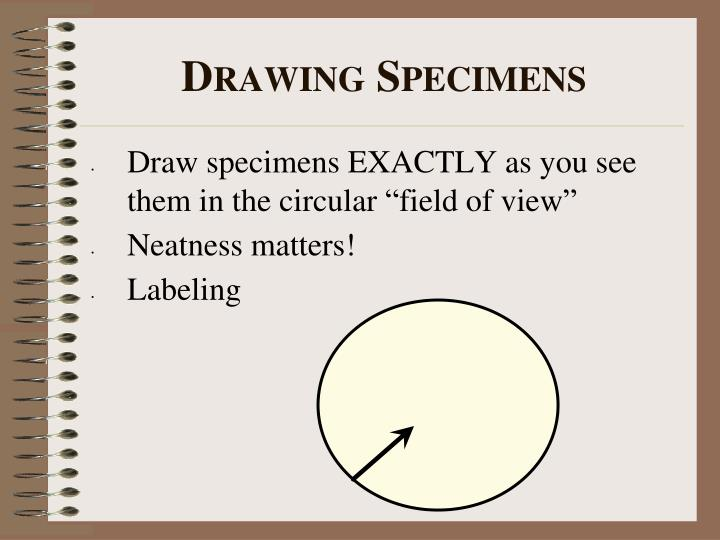 "Draw specimens EXACTLY as you see them in the circular ""field of view"""