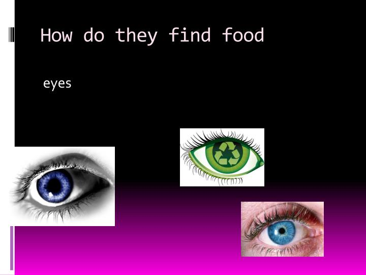 How do they find food