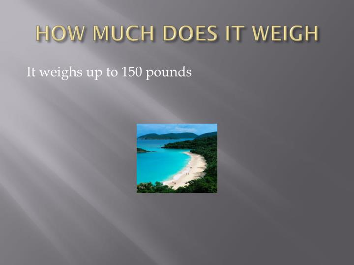 How much does it weigh