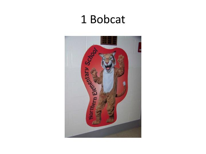 1 Bobcat