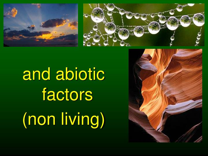 and abiotic factors