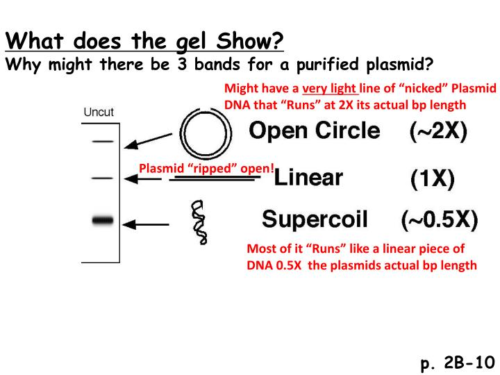 What does the gel Show?