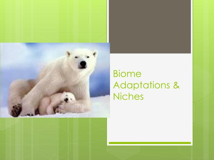 biome adaptations niches