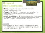 grassland plant adaptations