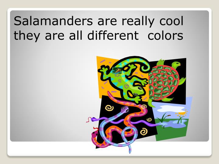 Salamanders are really cool they are all different  colors
