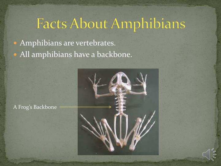 Facts About Amphibians