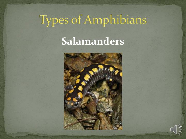 Types of Amphibians