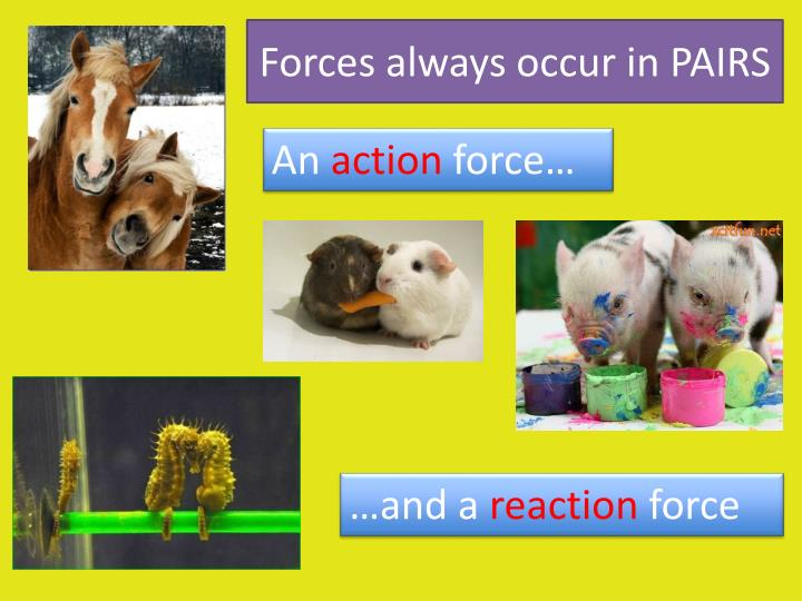 Forces always occur in pairs