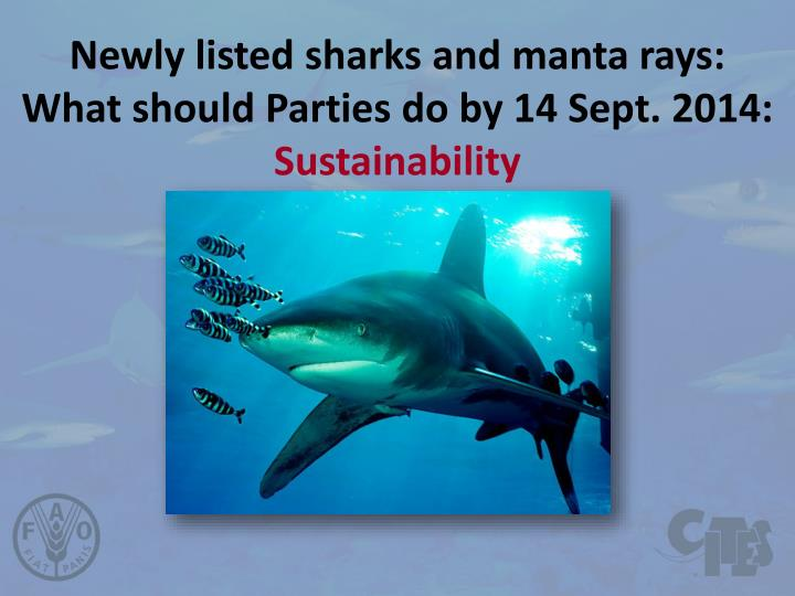 newly listed sharks and manta rays what should parties do by 14 sept 2014 sustainability n.