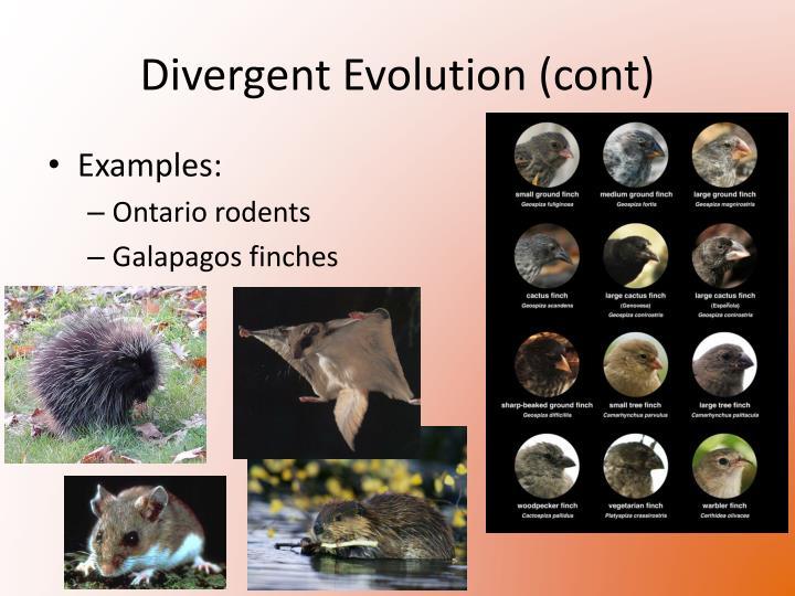 Divergent Evolution (cont)