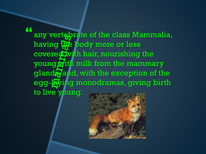 any vertebrate of the class Mammalia, having the body more or less covered with hair, nourishing the young with milk from the mammary glands, and, with the exception of the egg-laying