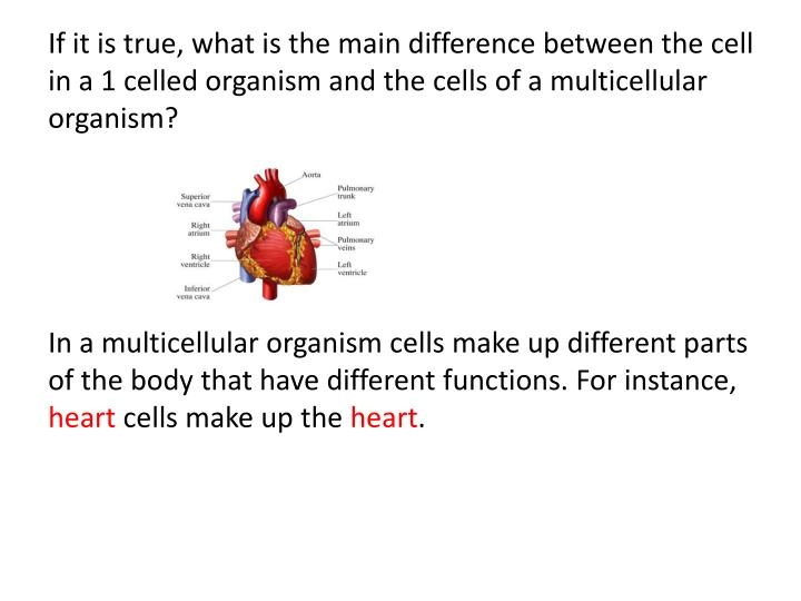 If it is true, what is the main difference between the cell in a 1 celled organism and the cells of a multicellular organism?