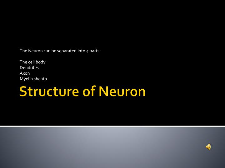 The Neuron can be separated into 4 parts :