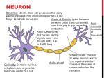 neuron6