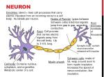 neuron7