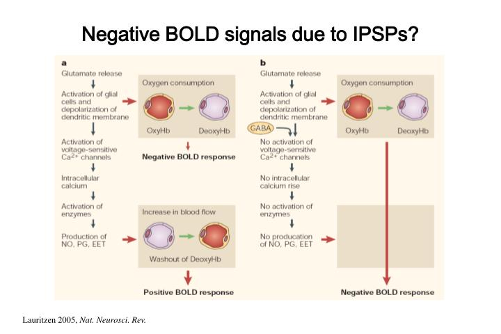 Negative BOLD signals due to IPSPs?
