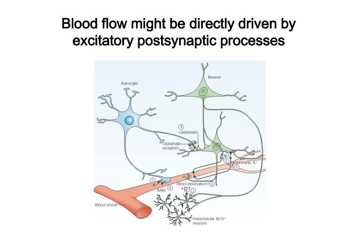 Blood flow might be directly driven by excitatory postsynaptic processes