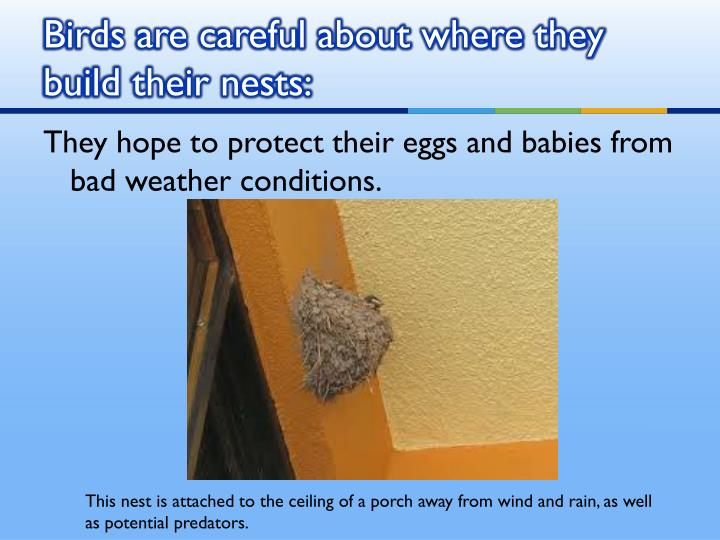Birds are careful about where they build their nests: