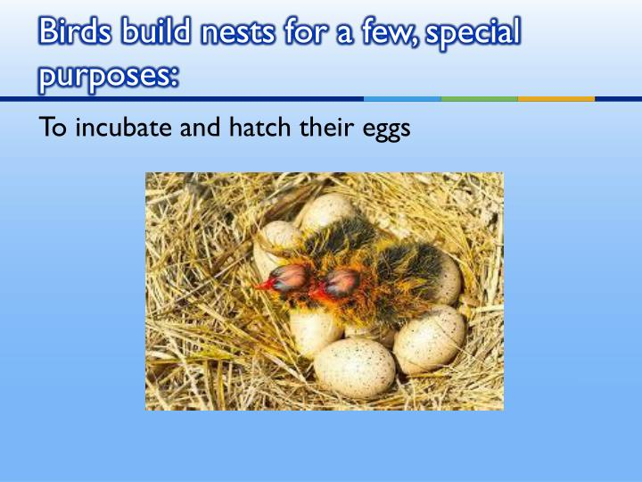 Birds build nests for a few special purposes1